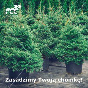 FCC Polska zachęca do tego, by wspólnie podarować świątecznym drzewkom drugie życie – wszystkie choinki dostarczone do firmy zostaną zasadzone na terenach wokół jej zakładów fot,.FCC Polska