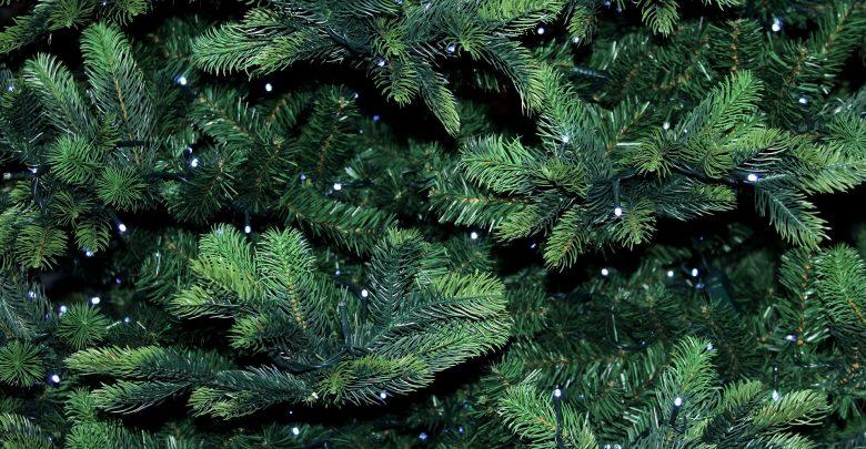 Zabrze: Oddaj swoje bożonarodzeniowe drzewko (fot.poglądowe/www.pixabay.com)