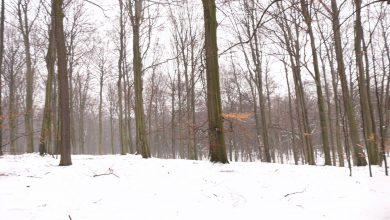Będzie wycinka w Lasach Murckowskich? Nadleśnictwo Katowice odpowiada