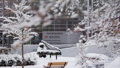 Kiedy ponowne otwarcie Palmiarni w Gliwicach? Pracownicy pucują tysiące roślin! Fot. D. Nita-Garbiec/UM Gliwice