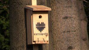Dziuplaki nie będą bezdomne. Kitku też nie. Katowice i Bytom stawiają domki dla kotów i budki dla ptaków