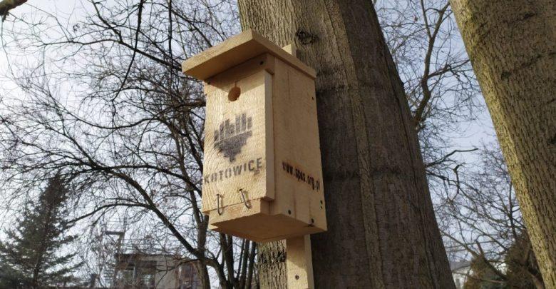 W Katowicach zawisną budki dla dziuplaków. Wszystko w ramach projektu KATOobywatel (fot.KATOobywatel)