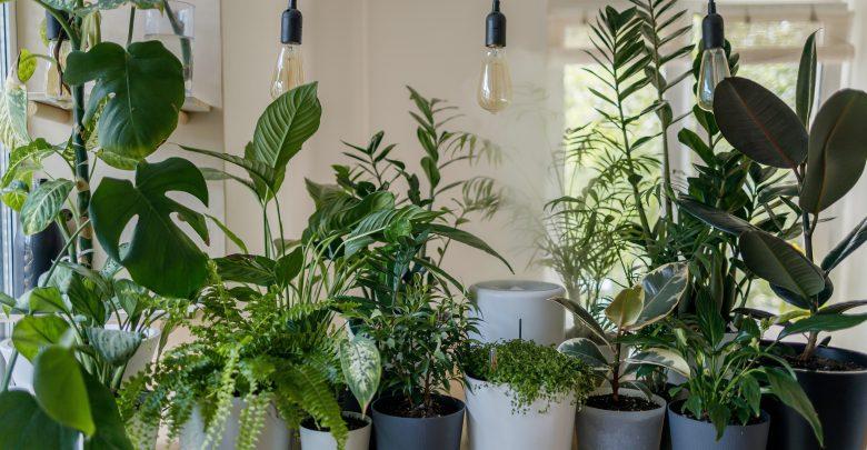 Naturalne filtry, czyli rośliny oczyszczające powietrze w domu (foto: materiał partnera)
