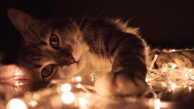17 lutego to Światowy Dzień Kota. Świetna okazja do adopcji kitku ze schroniska! (fot.pexels.com)