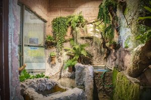 Przebudowa terrarium wyjątkowego żółwia w śląskim ZOO zakończona. Pomogła kasa z 1 procenta (fot.Śląski Ogród Zoologiczny)