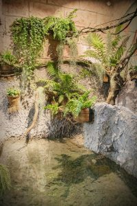 W słoniarni Śląskiego Ogrodu Zoologicznego zakończona została przebudowa i modernizacja terrarium dla żółwia sępiego (fot.Śląski Ogród Zoologiczny)
