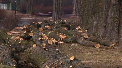 Osiedle Green Park Silesia przy Parku Śląskim wciąż nie powstaje. Inwestor traci już cierpliwość!
