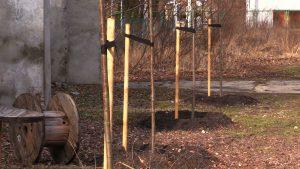 Każdy może wskazać miejsce, gdzie może rosnąć drzewo. Rusza akcja wCOP drzewo w Katowicach