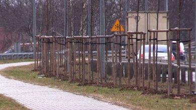 """W Katowicach ruszyła trzecia edycja akcji """"wCOP drzewo"""". Mieszkańcy mogą wskazywać miejsca, w których, ich zdaniem, powinny zostać posadzone drzewa."""
