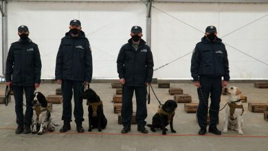 """Psy służbowe """"skarbówki"""", jako pierwsze w Polsce pomogą w wykrywaniu COVID-19 (fot.Ministerstwo Finansów)"""