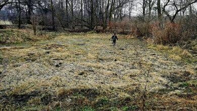 Zobaczcie, co znaleziono obok zamku w Przyszowicach. Na miejsce pojechali policjanci z Gliwic (fot.KMP Gliwice)