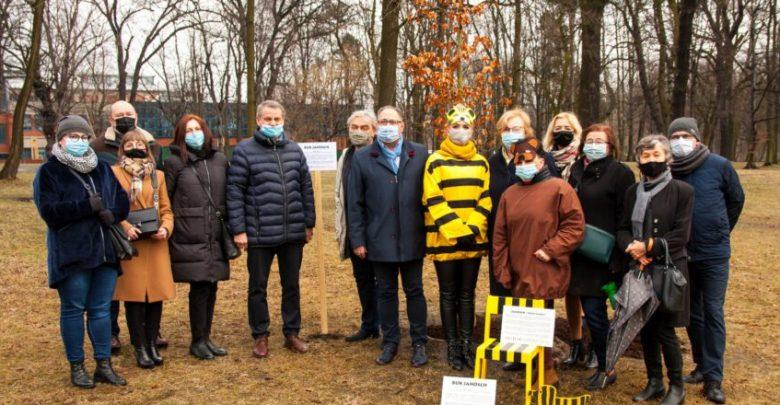 W Zabrzu posadzono drzewo w ramach obchodów 90. urodzin Janoscha. Fot. UM Zabrze