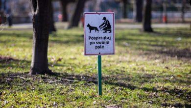 Psie kupy zalewają trawniki! Bielsko apeluje do mieszkańców! Fot. UM Bielsko-Biała