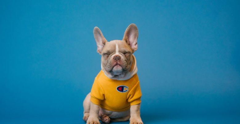 Kiedy udać się z psem do okulisty? (fot.materiały partnera)