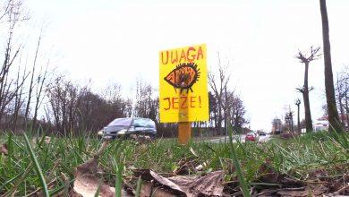 Słitaśne znaki z jeżami i dzikami pojawiły się w Mysłowicach. Kto je ustawia przy drogach?
