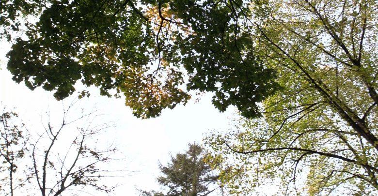 Leśnicy apelują: NIE WCHODŹCIE do lasów!