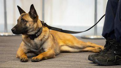 Jest projekt ustawy regulującej status zwierząt w służbach mundurowych (fot.MSWiA)