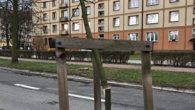Jakiś DZBAN znów zniszczył drzewa w Tychach! [ZDJĘCIA]. Fot. FB/Andrzej Dziuba – Prezydent Tychów