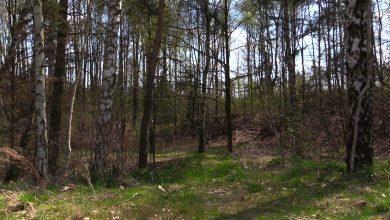 Od 1 maja nocowanie w lesie już legalne. Nadleśnictwa wyznaczyły już specjalne strefy