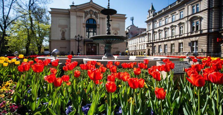 Tulipany przed Teatrem Polskim w ubiegłym roku. [fot. Paweł Sowa / UM Bielsko-Biała]