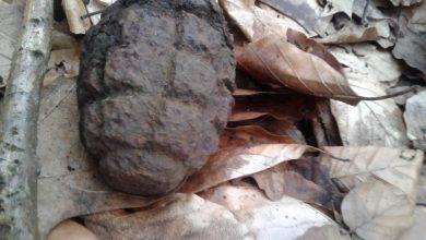 """Szyszka """"urwiłapka""""? Taki """"gatunek"""" znaleziono pod Gliwicami. Granat ma ponad 70 lat (fot.Policja Gliwice)"""