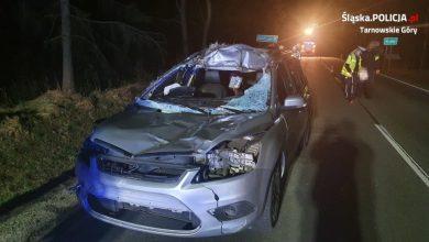 Śląskie: Zderzyła się z łosiem. 30-latka trafiła do szpitala (fot.Śląska Policja)