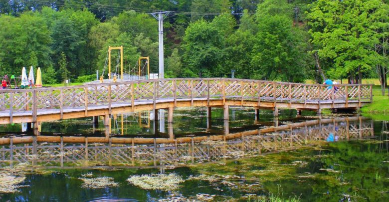 Ciepła woda w zbiornikach stwarza idealne warunki do rozwoju roślinności wodnej – fitoplanktonu. Stanowi on główne pożywienie amurów. [fot. UM Wisła]