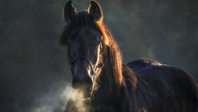 Chciała sprzedać konia, a straciła pieniądze. Internetowi oszuści nadal aktywni (fot.poglądowe/www.pixabay.com)