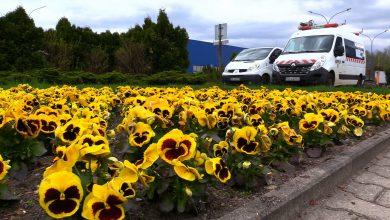 Przynieście 8 maja w Katowicach elektrośmieci. Miasto wymieni Wam je na nasiona kwiatów!