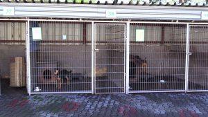 Rybnickie schronisko szuka kochających domów dla swoich podopiecznych. Czeka ponad 50 psów