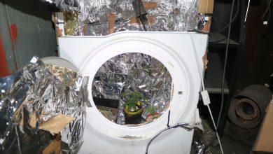 Uprawiał marihuanę w pralce. Grozi mu kilka lat więzienia (fot.Policja Kujawsko-Pomorska)