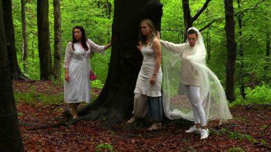 W Katowicach odbył się zbiorowy ślub... z bukami! Aktywiści chronią 200-letnie drzewa przed rzezią!