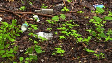 Najlepszy bat na dzikie wysypiska śmieci? Chorzów instaluje fotopułapki