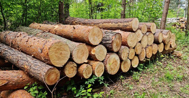 W Mysłowicach zniknie 11 hektarów lasu? W dzielnicy Kosztowy trwa wycinka drzew (foto: Fatima Orlińska)