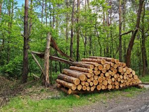 Na terenie dzielnicy Kosztowy w Mysłowicach trwa wycinka drzew. Według wstępnych założeń z powierzchni ma zniknąć aż 11 hektarów lasu, czemu sprzeciwili się mieszkańcy (fot.Fatima Orlińska)
