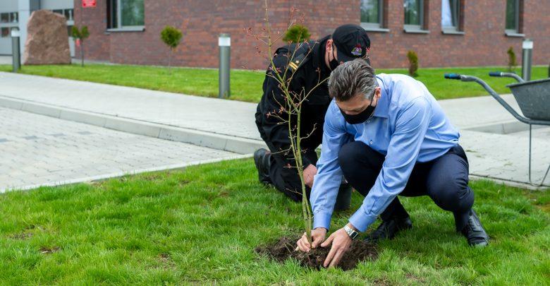 Warto podkreślić, że drzewa nie tylko w procesie fotosyntezy uwalniają tlen, ale pochłaniają dwutlenek węgla, oczyszczają powietrze z pyłów i gazów, jak również zatrzymują wody opadowe czy wpływają na zmniejszenie hałasu w dużych aglomeracjach. [fot. UM Bytom]