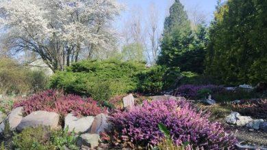 Dziś otwiera się Miejski Ogród Botaniczny w Zabrzu. Fot. UM Zabrze