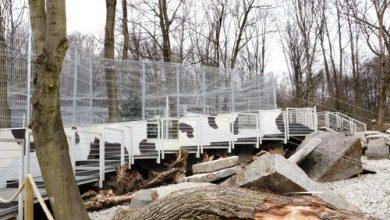 Pantery śnieżne ze śląskiego ZOO mają nowy wybieg. To inwestycja z Marszałkowskiego Budżetu Obywatelskiego (fot.Śląski Ogród Zoologiczny)