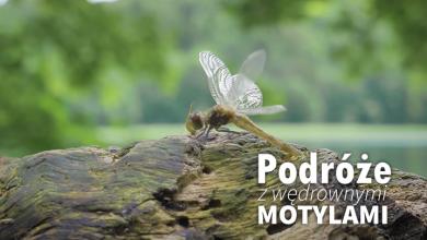 Podróże z wędrownymi motylami - Suwalszczyzna