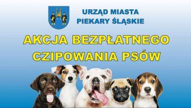 Zaczipuj swojego psa, czyli akcja bezpłatnego czipowania psów w Piekarach Śląskich (fot.UM Piekary Śląskie)