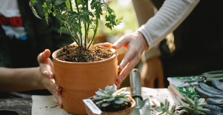 Wiosna już jest, a czy Ty masz wszystkie narzędzia do ogrodu? (foto: materiał partnera)