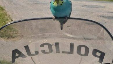 Papuga postanowiła skontrolować pracę patrolu policji ;) (fot.policja.pl)