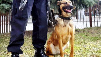 Sejm przyjął projekt ustawy regulującej status zwierząt w służbach mundurowych (fot.KPP Bielsk Podlaski)