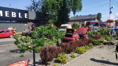 Olbrzymie drzewo przewróciło się na samochód w Żywcu. W środku znajdowali się ludzie! O sprawie poinformowało Radio Bielsko (fot.Radio Bielsko)