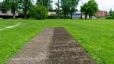 Bytom sadzi łąki kwietne. Zajmą 20 tys. m2. Fot. UM Bytom