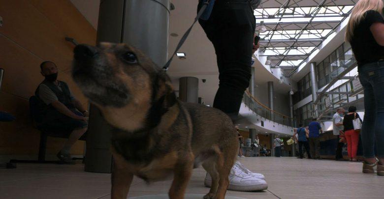 Do urzędu miasta na czterech łapach! Psy mogą wchodzić do magistratu w Dąbrowie Górniczej