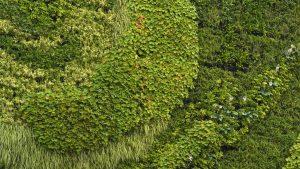 Zielony dach, ogród wertykalny czy zielona fasada. Katowice będą zwalniały z podatku od nieruchomości za ekologię