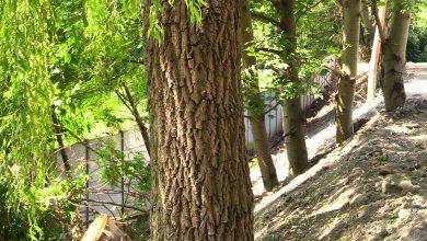 Dewastacja drzew na jednym z terenów dzierżawionych przez Katowice prywatnej spółce