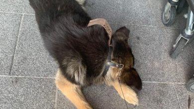 Śląskie: Zostawił chorego psa na upale przed centrum handlowym. Wrócił po ponad dwóch godzinach (fot.Śląska Policja)