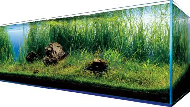 Akwarium w domu (foto: materiał partnera)